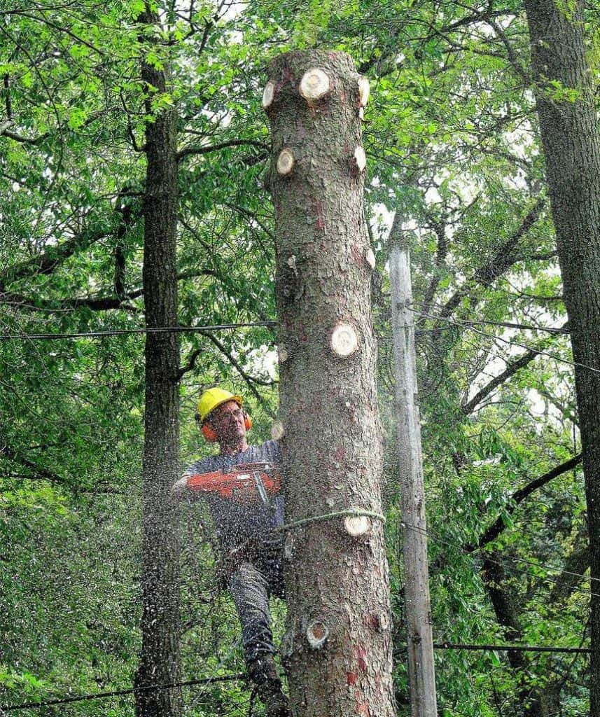 Tree Service | AAA Irish Tree Service | Greater Grand Rapids