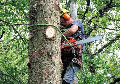 Tree Trimming Services for Byron Center