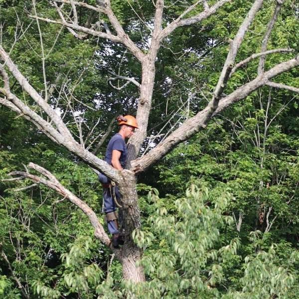 Dead Tree & Stump Removal